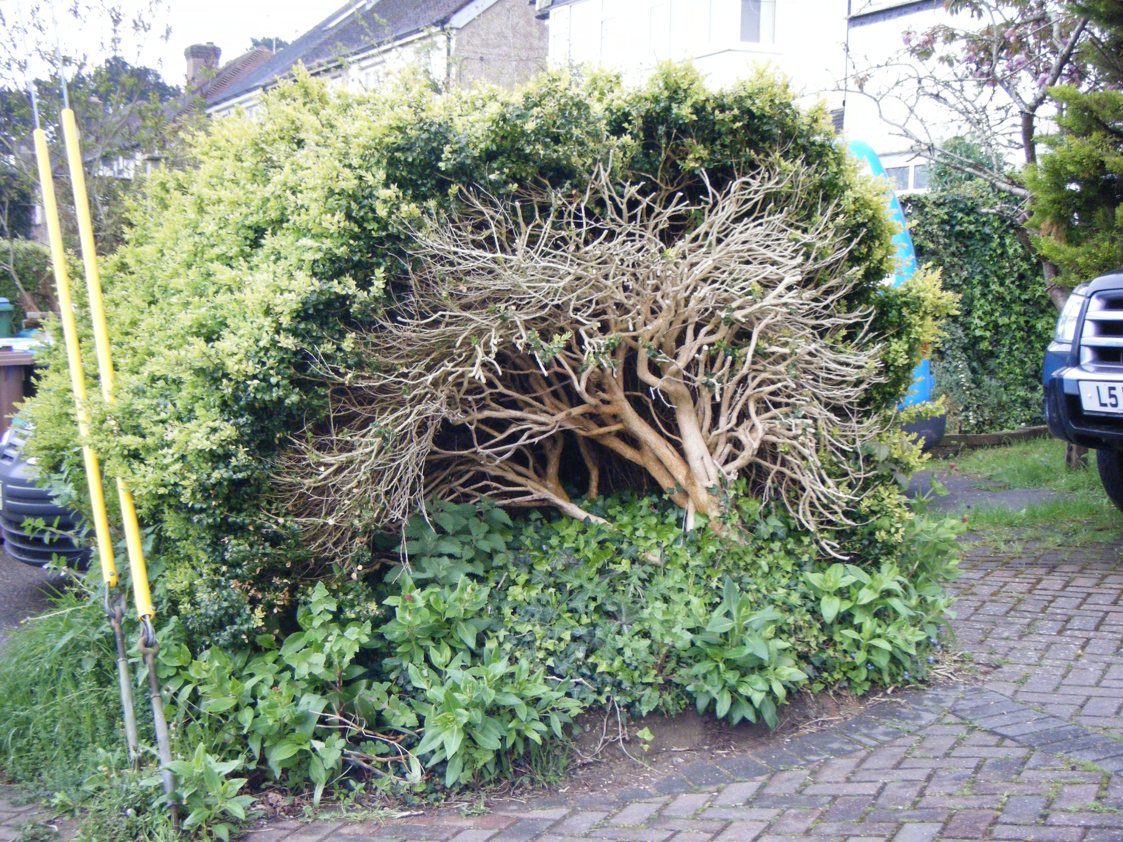 How to get low maintenance hedges plantplots for Garden shrubs