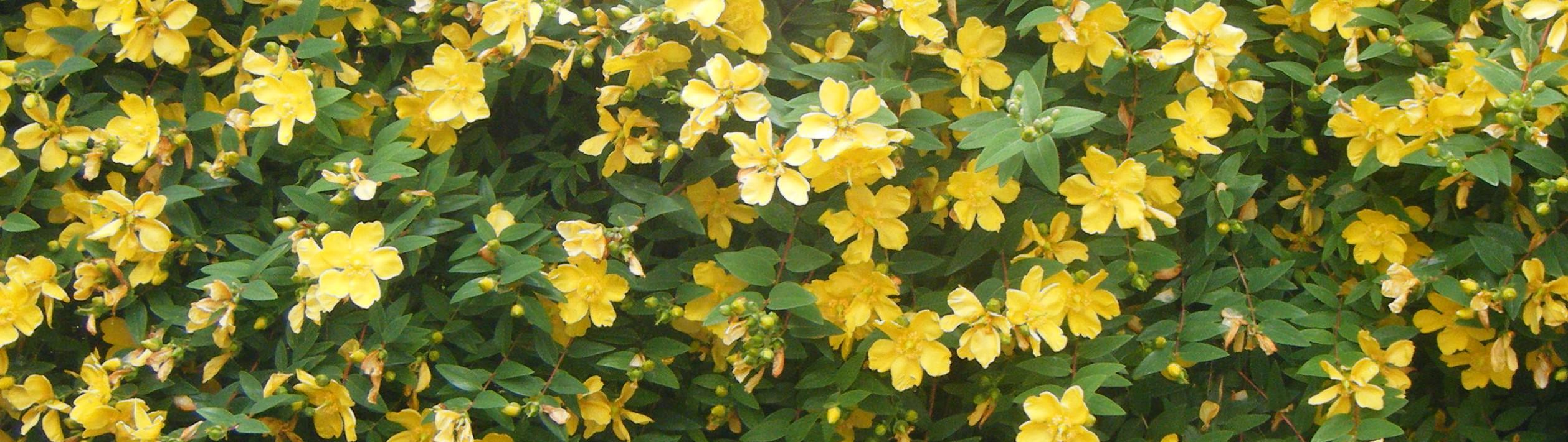 100 no sun plants maple hill 101 florida friendly - Plants that need no sunlight ...