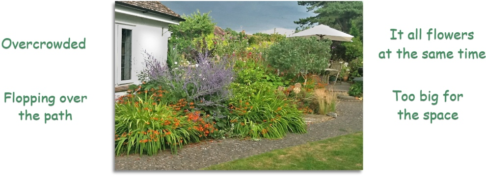 How to get a low maintenance border in your garden for Best no maintenance plants