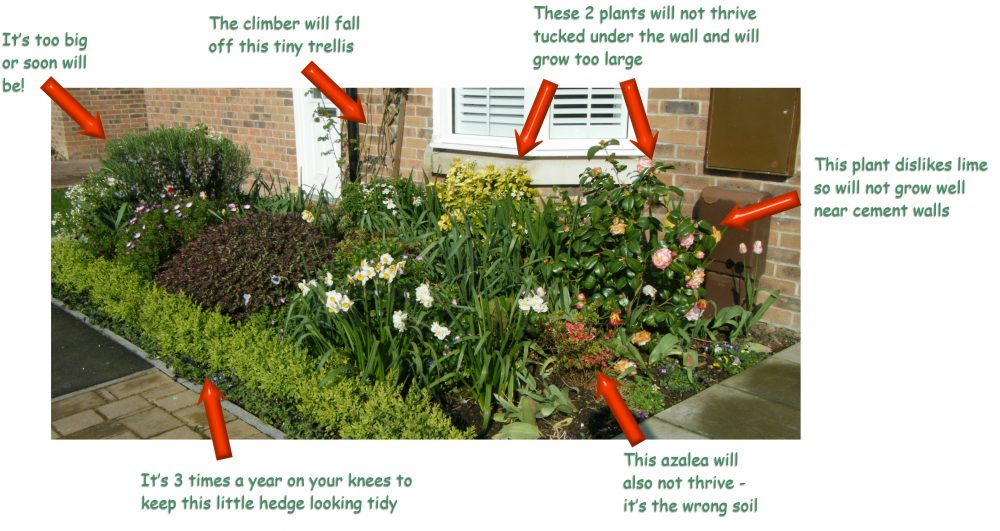 How to get a low maintenance border in your garden for Low maintenance border shrubs