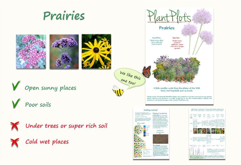 Garden Border Planting Design Plan soft open planting scheme bee friendly